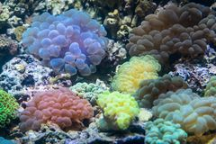 Divers organismes colorés d'actinie Photographie stock