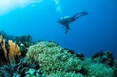 Divers récifs coraliens durs dans Gorontalo, Indonésie Images stock