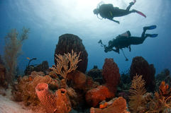 Divers and Reef. Scene depicting an underwater photographer and buddy exploring royalty free stock photos