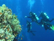 Divers on the reef Stock Photo