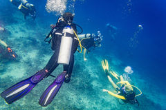Divers scuba diving looking at sea turtle and fish under water stock photography