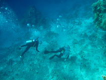 Divers On The Sea Bottom Royalty Free Stock Photo