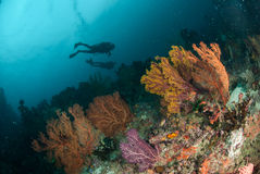 Divers, sea fan in Ambon, Maluku, Indonesia underwater photo Stock Images