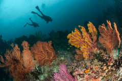 Divers, sea fan in Ambon, Maluku, Indonesia underwater photo Royalty Free Stock Images
