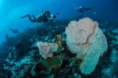 Divers and sea fan Muricella in Banda, Indonesia underwater photo Stock Image