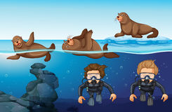 Divers and seals in the sea. Illustration Royalty Free Stock Photos