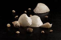 Divers Seashells photos stock