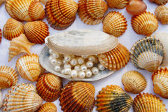 Divers seashells Photographie stock libre de droits