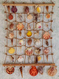 Divers Seashells Photos libres de droits