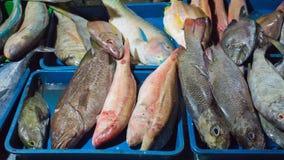 Divers soort vissen verkoopt op traditionele markt in Indonesië royalty-vrije stock foto's