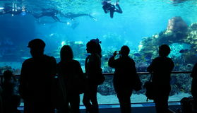 People watching divers aquarium scene Stock Photography