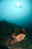 Divers, sponge in Ambon, Maluku, Indonesia underwater photo Royalty Free Stock Photography