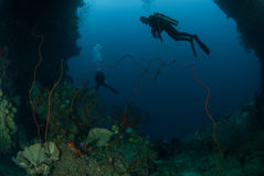 Divers, sponge, wire corals in Ambon, Maluku, Indonesia underwater photo Stock Photo