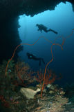 Divers, sponge, wire corals in Ambon, Maluku, Indonesia underwater Stock Image