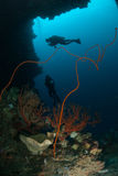 Divers, sponge, wire corals, sea fan in Ambon, Maluku, Indonesia underwater photo Stock Images