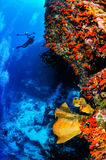 Divers and sponges in Banda, Indonesia underwater photo Royalty Free Stock Photo
