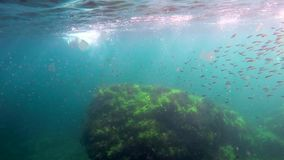 Flock of fish under water. Divers swim in the midst of a pack of small fish under the water stock video