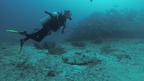 Divers swim underwater with aqualungs. Deepness. Colony of fish. Coral reef. stock footage