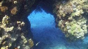 Divers swim through the underwater tunnel. Red Sea stock video