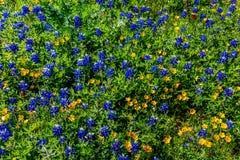 Divers Texas Wildflowers images libres de droits