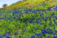 Divers Texas Wildflowers image stock