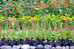 Divers types de fleurs dans des pots qui sont placés dans le jardin Images libres de droits