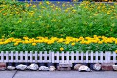 Divers types de fleurs dans des pots qui sont placés dans le jardin Photo libre de droits
