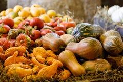 Divers types de potirons d'automne mûrs à la ferme Images stock