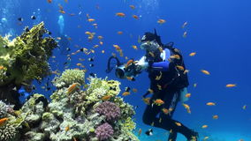 Divers underwater on coral reef Abu Nuhas in Red sea. Swimming in world of colorful beautiful wildlife. Inhabitants in search of food. Abyssal diving stock footage