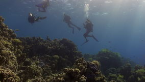 Divers underwater on coral reef Abu Nuhas in Red sea. Swimming in world of colorful beautiful wildlife of reefs and algae. Inhabitants in search of food stock video