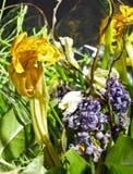 Divers verwelkte bloemen Stock Foto