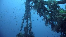 Divers visiting the wreck Giannis D, Red Sea, Sharm el Sheikh, Egypt stock video footage