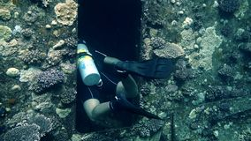 Divers visiting the wreck Giannis D, Red Sea, Sharm el Sheikh, Egypt. Sinai stock footage
