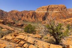 Divers woestijnlandschap in Utah, Verenigde Staten. Royalty-vrije Stock Afbeelding