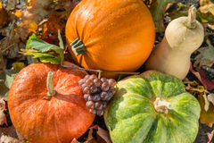 Diversa calabaza con el manojo de uva en fondo de las hojas de otoño foto de archivo libre de regalías