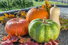Diversa calabaza con las hojas de otoño en la superficie de piedra Front View foto de archivo libre de regalías