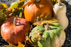 Diversa calabaza con las hojas de otoño en la superficie de piedra Sobre la visión imágenes de archivo libres de regalías