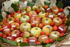 Diversa calidad de las manzanas Imágenes de archivo libres de regalías