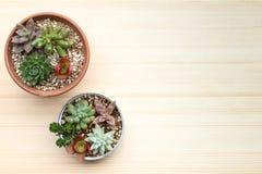 Diversa clase de plantas suculentas en un ajuste de la poder en la cartulina con las hojas secadas Imágenes de archivo libres de regalías