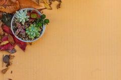 Diversa clase de plantas suculentas en un ajuste de la poder en la cartulina con las hojas secadas Imagenes de archivo