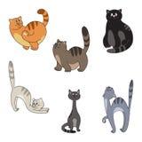 Diversa colección de los gatos Imagen de archivo libre de regalías