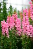 Diversa especie de flores coloridas que florecen durante la primavera en el ámbito Wintergardens de Auckland Imagenes de archivo