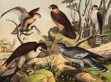 Diversa especie de pájaros en el salvaje stock de ilustración