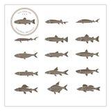 Diversa especie de pescados Stock de ilustración