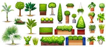 Diversa especie de plantas ilustración del vector