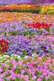 Diversa flor en el jardín púbico Imagen de archivo