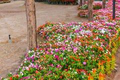 Diversa flor en el jardín púbico Fotografía de archivo