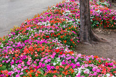 Diversa flor en el jardín púbico Fotos de archivo