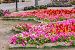 Diversa flor en el jardín púbico Foto de archivo libre de regalías