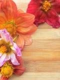 Diversa frontera coloreada de la flor de la dalia en fondo de madera Imagen de archivo libre de regalías